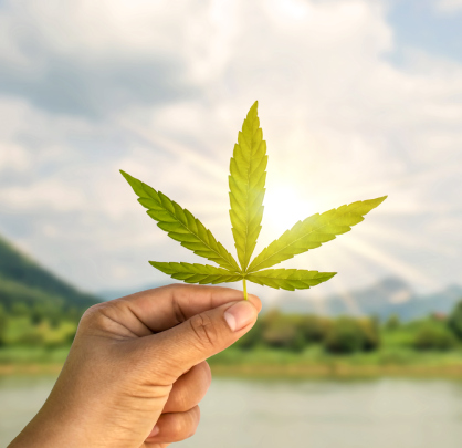 Cure8 will help you to expand your Cannabis Business in the US and Canada